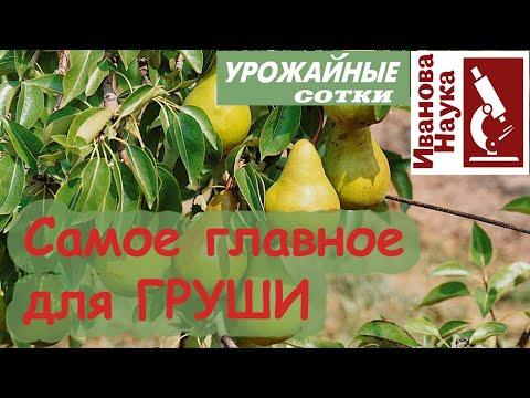 Для большого и вкусного урожая! Оздоровление сада от ржавчины.