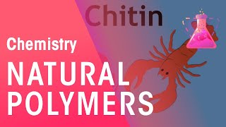 Natural Polymers | Chemistry for All | The Fuse School