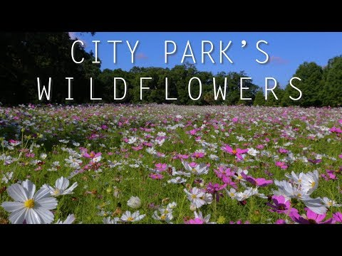 City Park wildflower fields a delight to behold
