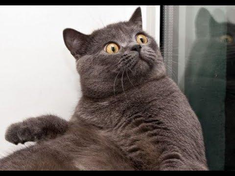 Si te ries pierdes! Intenta ver este movies de gatos sin morirte de risa!!