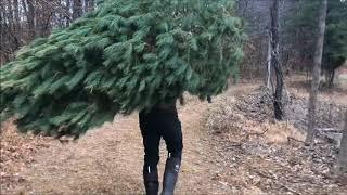 Getting a christmas tree!!