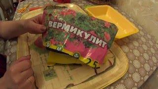 Выращивание рассады в ВЕРМИКУЛИТЕ!!!