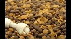 dog food images