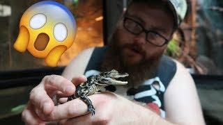 we-got-new-baby-alligators