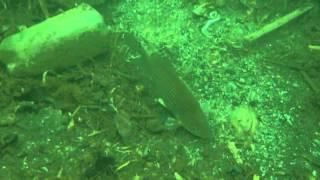 подводная охота январь 2013г