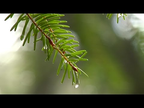 QUEST: Life of a Raindrop