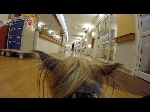 Therapy dog, Cheeto, wears GoPro & visits patients in Children's Hospital of Wisconsin