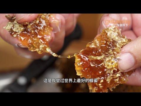 seeking honey in tibet himalaya