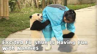 Excited Fu Shun Is Having Fun With Nannies | iPanda