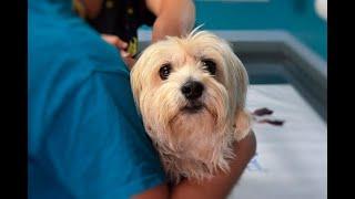Estos son los beneficios de esterilizar a mascotas   Noticias Caracol