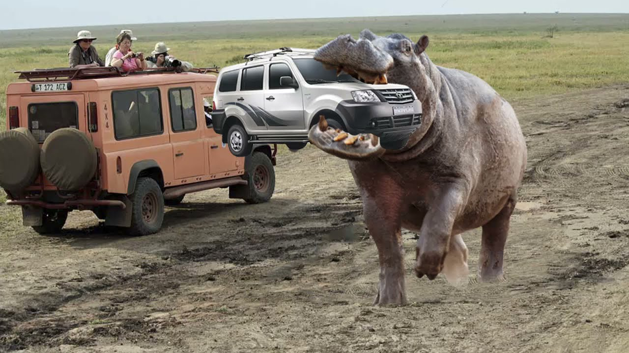 Angry Giant Animals Attack Vehicles - Animals Attack And Fight - Elephant, Lion, Buffalo, Zebra...