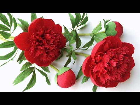 Smotrite Segodnya Video Novosti Abc Tv How To Make Red Charm Peony Paper Flower From Crepe Paper Craft Tutorial Na Onlajn Kanale Russia Video News Ru