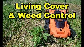 NO TILL Gardening using Black & Decker 40V Cordless Mower Review to maintain living cover
