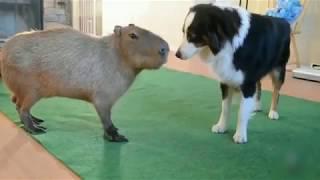 Видео о животных!!