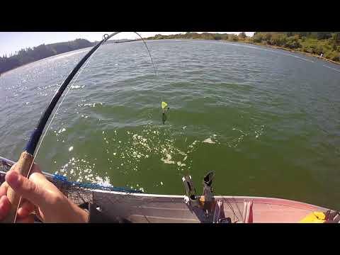 8-28-2018 Siuslaw River Chinook Salmon
