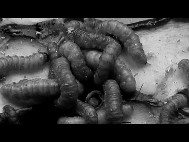 ARMANDO URIBE - DISIDENTE Videos De Viajes