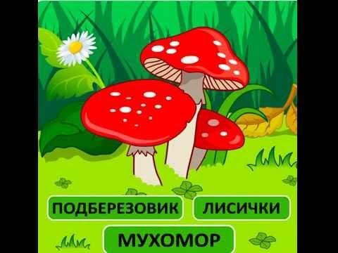 Развивающий мультик учим грибыиз YouTube · Длительность: 35 с  · Просмотры: более 10000 · отправлено: 17/09/2014 · кем отправлено: Наша Умняша
