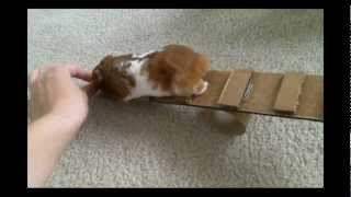 How to Make 3 Homemade Hamster Toys