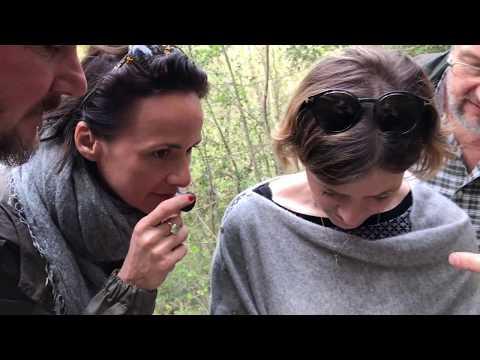 Tuscan Truffle Hunt Experience with Artviva, Tuscany Italy