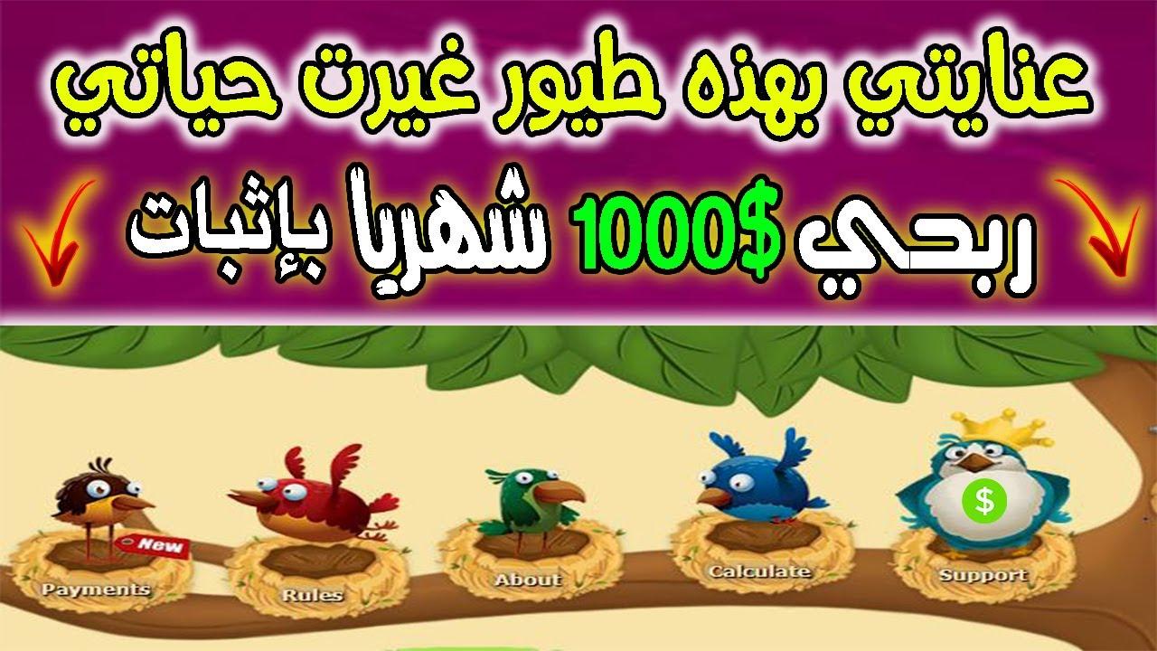 بهذه طريقة إثبات سحب أزيد من 1000$ دولار شهريا.. من موقع الطيور Golden-Farm !!شاهد بنفسك..2020💰