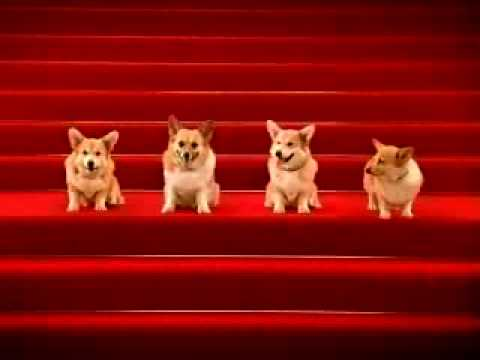 Corgis Singing Happy Birthday Sent 9780 Times