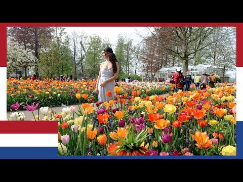 WORLDS BIGGEST DUTCH FLOWER GARDENS KEUKENHOF NETHERLANDS: I DID NOT EXPECT THIS | TRAVEL VLOG IV