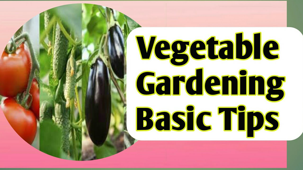 How to grow bitter gourd karela theorganic life - Gardening Tips For Beginners How To Grow Best Vegetable