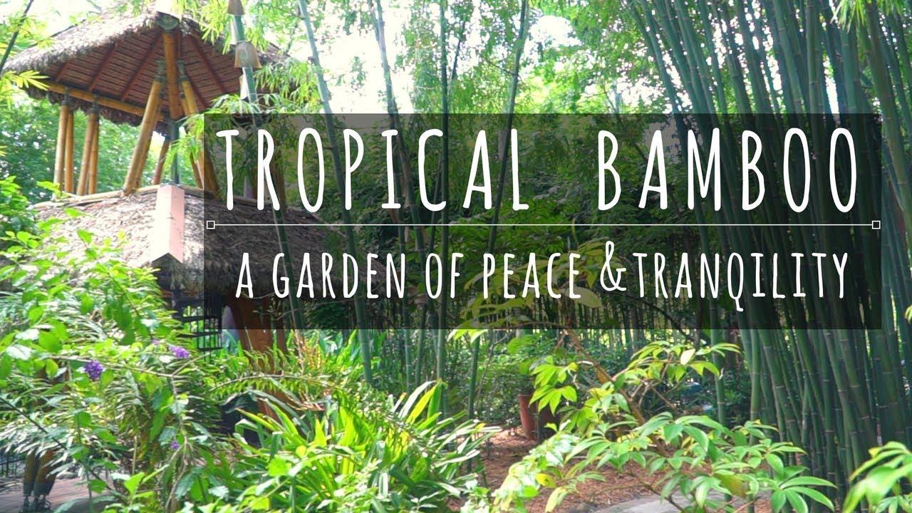 Tropical Bamboo Nursery And Gardens