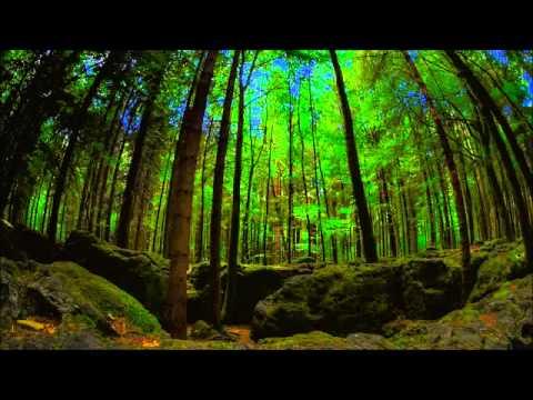Irish :  Ancient Druids