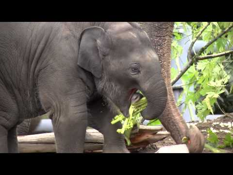 Cuteness Break: Watch Baby Elephant Lily's First Year Of Life