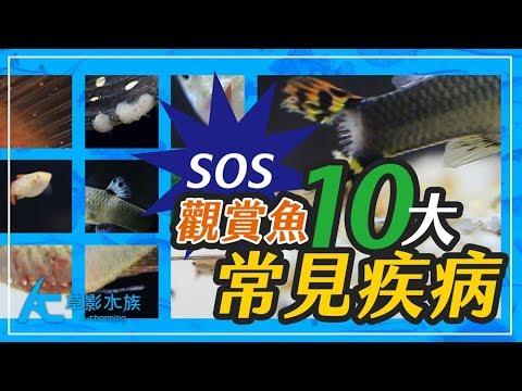 觀賞魚10種最常見的疾病(高畫質影片紀錄+解析)Ten common fish diseases of ornamental fish 養魚人森 AC草影水族