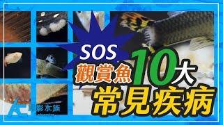 觀賞魚10種最常見的疾病(高畫質影片紀錄+解析)Ten common fish diseases of ornamental fish|養魚人森|AC草影水族