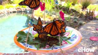 Butterflies Swarm a Home-Made Feeder