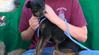 Yodi A4448163  Adopted!!!  & Pepsi A4448164  Rescued!!!