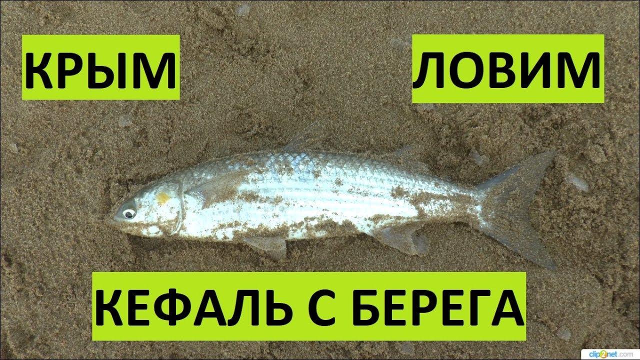 Крым. Рыбалка на море. Кефаль оснастка насадка.