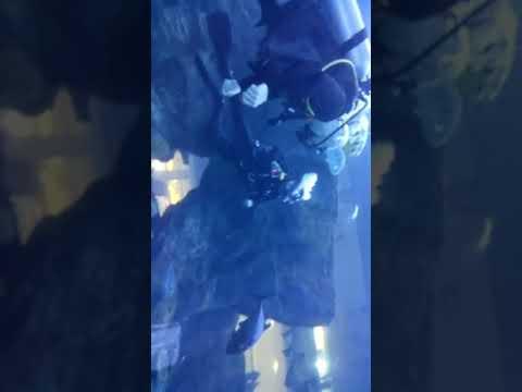 Dubai Underwater World   Big Sharks 🦈   World Biggest Aquarium Dubai   Underwater Zoo   #shorts 2021