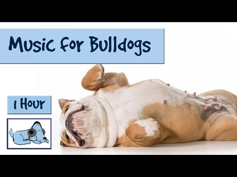 Music for Bulldogs of all Types! Frenchies, American or Engl