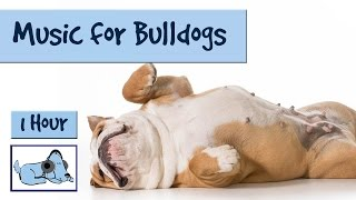 Music For Bulldogs Of All Types! Frenchies, American Or English Bulldogs.