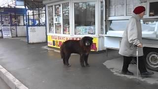 Странная собака в Вологде ч.1