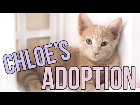 Chloe's California Adoption Adventure