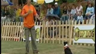 Amisambles Dog Walking Service - Dog Training With Ami- Agility