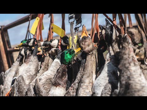 "Waterfowl Hunting Kansas: ""1 Time"" – Fowled Reality"