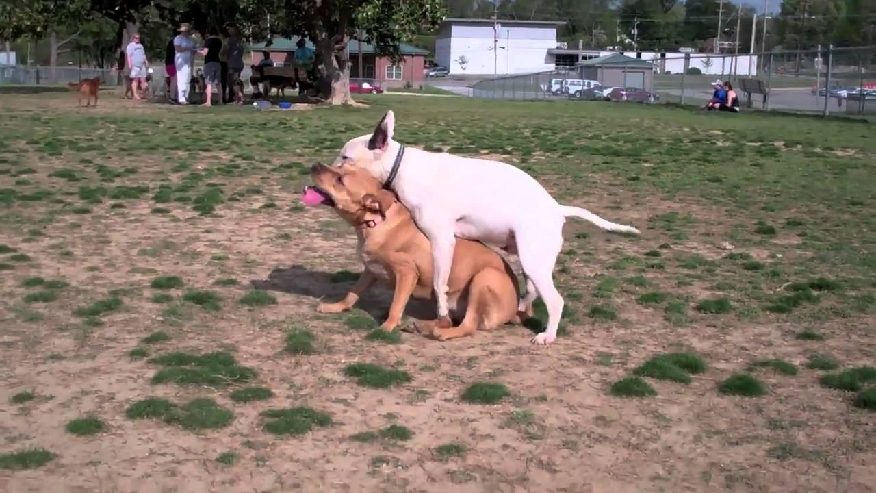 Dog Park Memphis