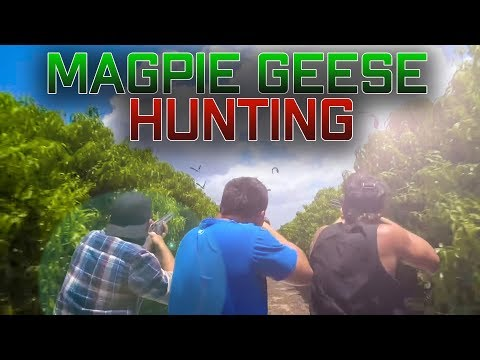 Magpie Geese Hunting Shooting Australia Aussie