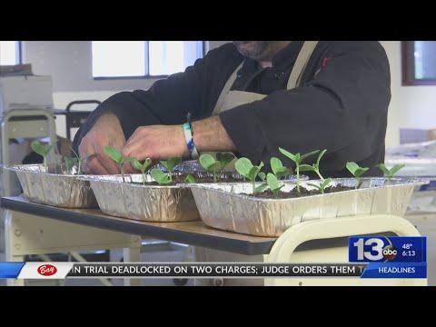 Rosenwald High School garden program making a come back