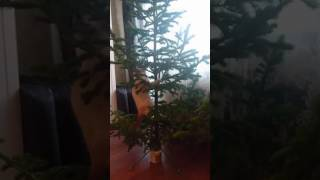 Прикол. Животные. Кошка падает с ёлки