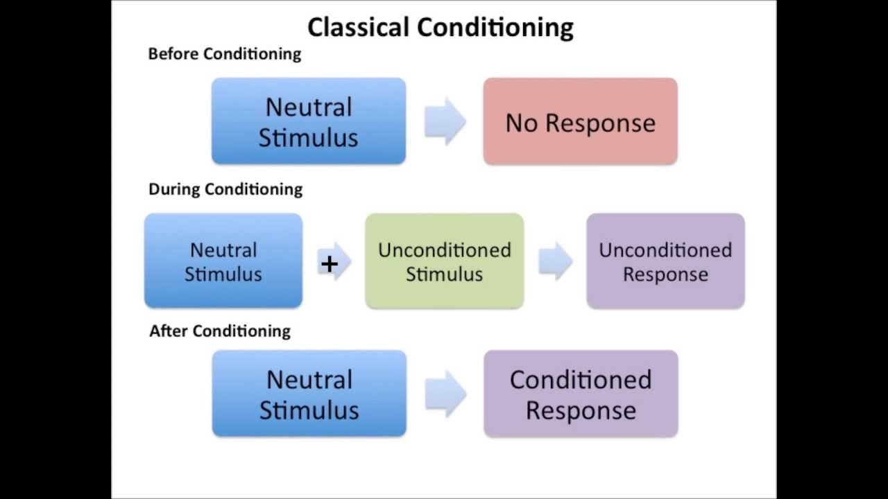 an analysis of the concept of classical conditioning theory Social learning theory classical conditioning the study of animal learning was commanded by the analysis of this theory hugely relies on the concept.