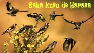 Saka Kuşu ile Yarasa,Sesli Masallar