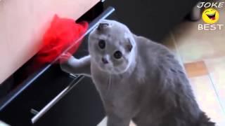 Самые смешные кошки 2016 #7