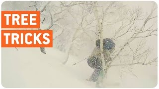 Skier Crashes Into Tree | Treehugger